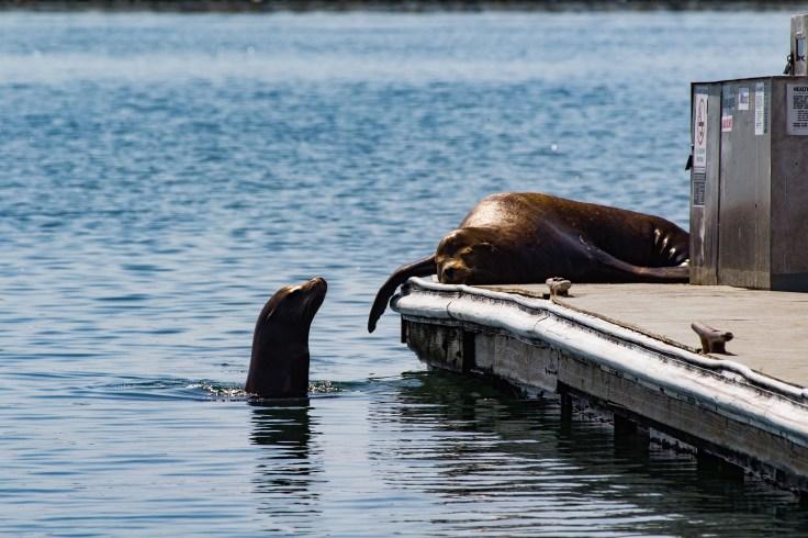 Slacking at Pillar Point Harbor. Dawn Page / CoastsideSlacking