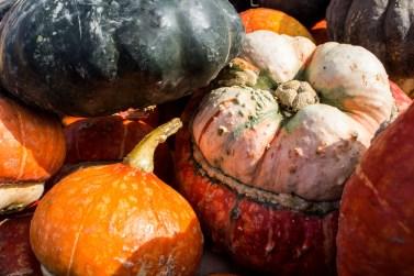 Pumpkin shopping - one of the joys of living on the California Coastside. Dawn Page / CoastsideSlacking