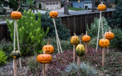Vlad the impaler terrorizes the coastside pumpik patches for our gruesome Halloween dispay. Dawn Page / CoastsideSlacking