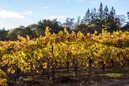 Fall in Sonoma. Dawn Page / CoastsideSlacking