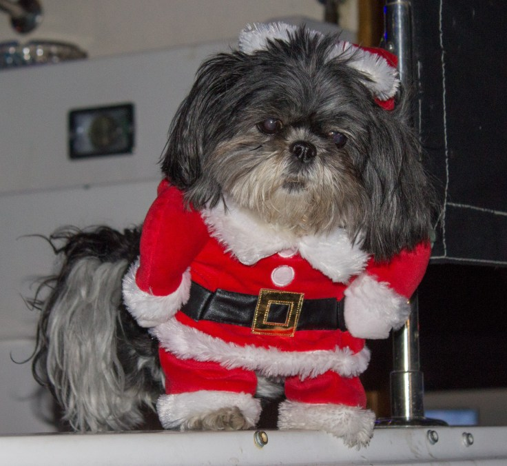 Decorated dogs are plentiful at the Pillar Point Harbor Lighted Boat Festival. Dawn Page / CoastsideSlacking