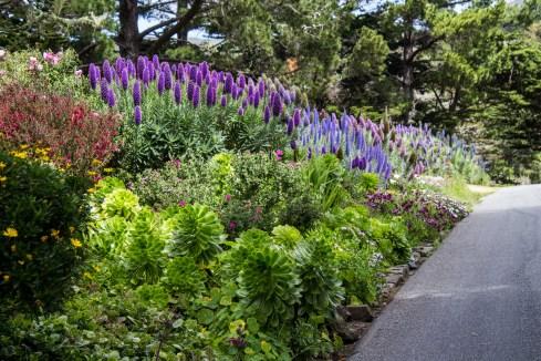 Super bloom in Montara. Dawn Page / CoastsideSlacking
