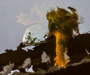 Stealth turtle, Pea Island National Wildlife Refuge. Dawn Page/CoastsideSlacking