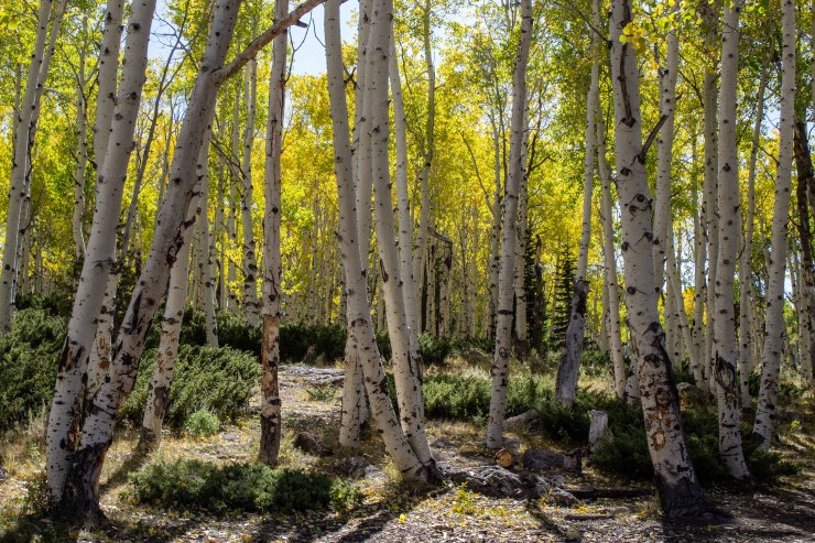 20190924 - pando and fish lake-IMG_0354