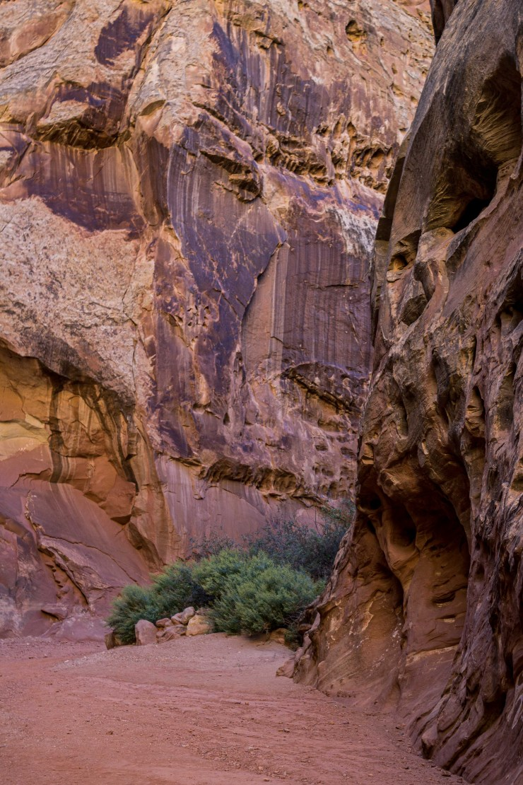 20190925 - capitol reef-IMG_0475