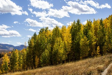 Autumn aspens at Crested Butte, CO, Gunnison National Forest. Dawn Page/CoastsideSlacking
