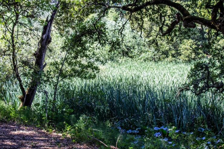 20200701 - stevens creek-IMG_0104