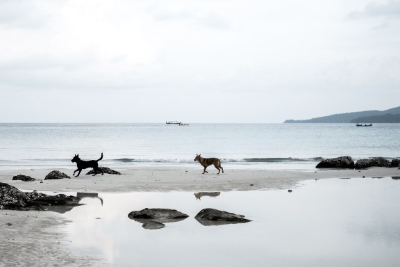 cobaltstate_cambodia_koh_rong_island_dogs