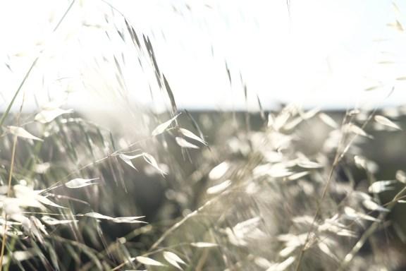 paca_valensole_lavender_fields_lavende_provence_ble