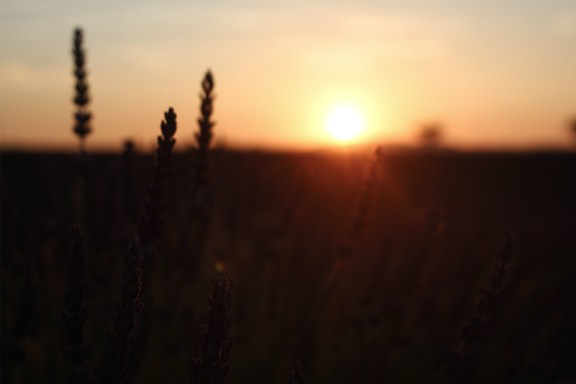paca_valensole_lavender_fields_sunset_blur