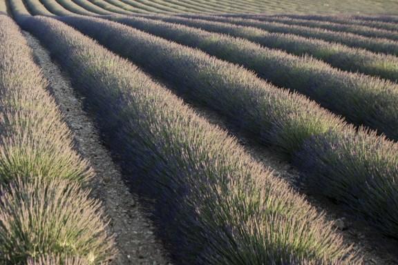 paca_valensole_lavender_fields_sunset_graphic_lines