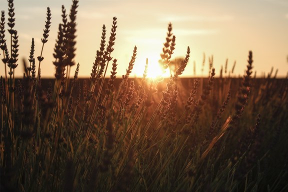 paca_valensole_lavender_fields_sunset_lavender_sun