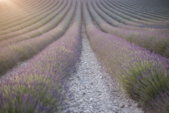 paca_valensole_lavender_fields_sunset_light