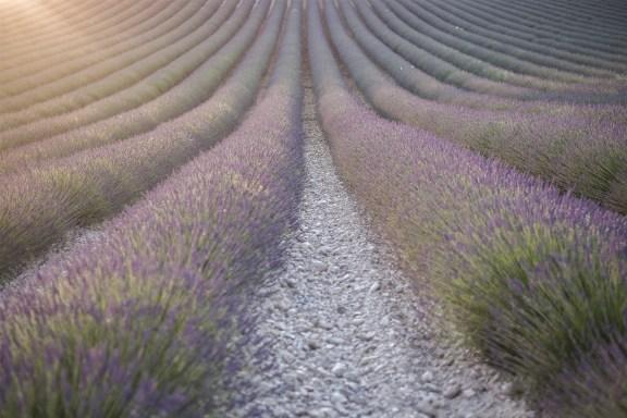 paca_valensole_lavender_fields_sunset_light