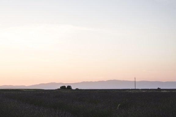 paca_valensole_lavender_fields_sunset_mountains