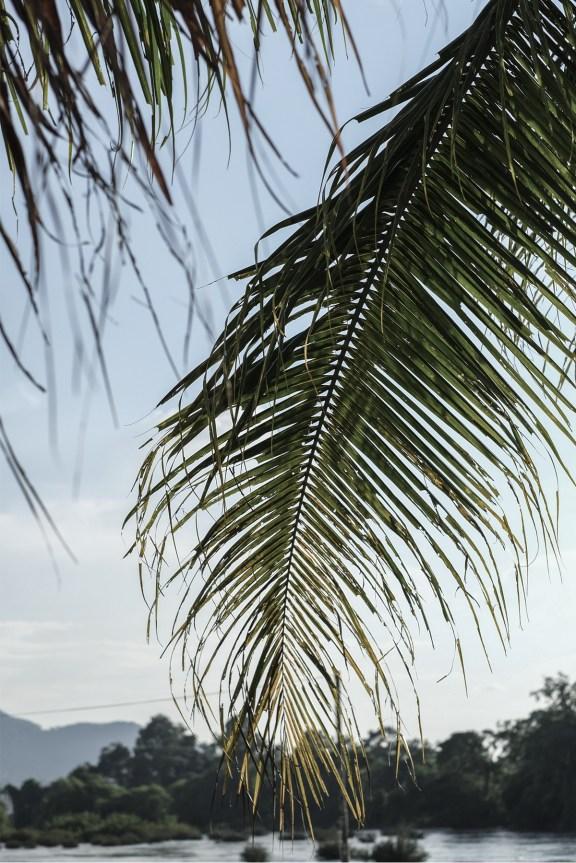 cobalt_state_laos_4000_islands_palm
