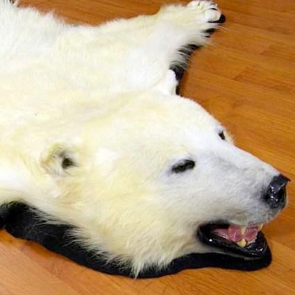 bear11-138.jpg