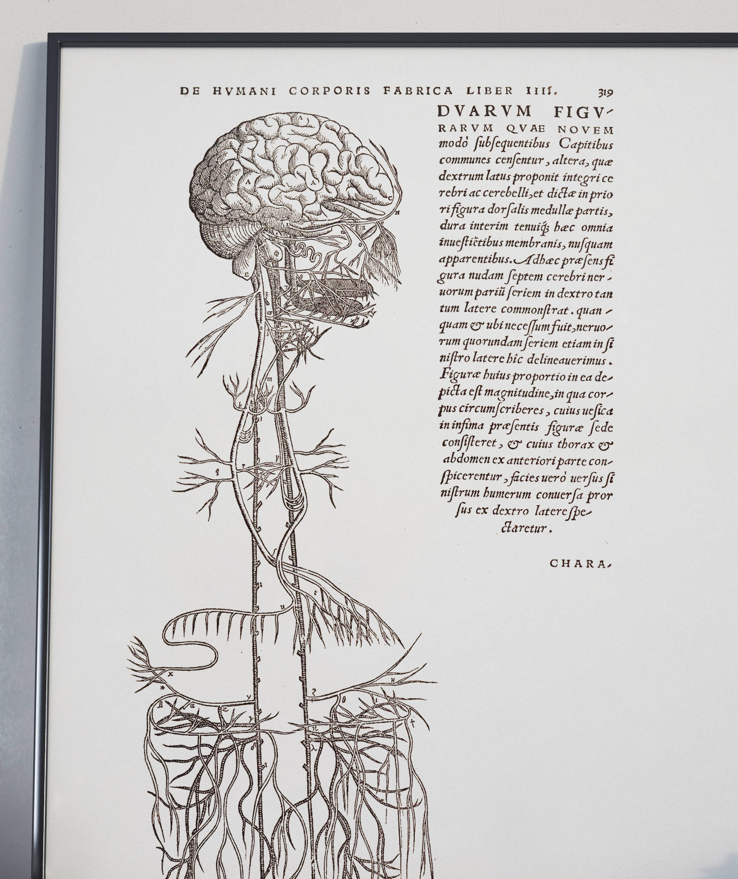 Drawing Of Brain And The Nervous System