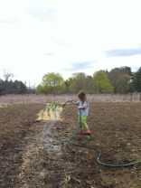 watering onions