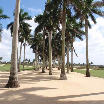 One of the many golf courses around Miami, Florida