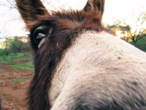 Donkey-108