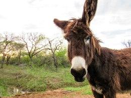 Donkey-117
