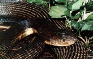 keeping reptiles