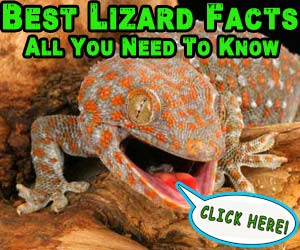 Best Lizard Facts: All You Need To Know – Cobras org