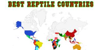 Reptile Habitat