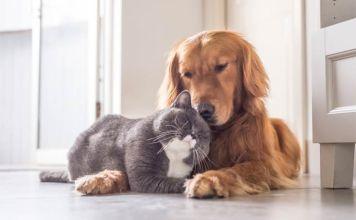 cat or dog