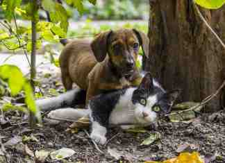 Flea Treatment for Cats and Dogs
