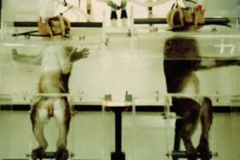 11. Ue prohíbe la venta de cosméticos probados en animales. (Buav/Eceae)