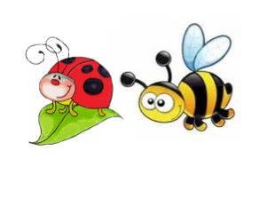 cocc et abeilles