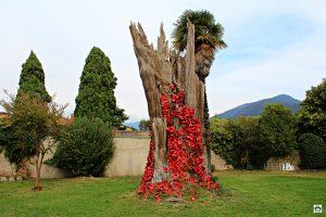 Iseo l'albero delle lattine - Cocco on the road