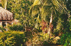 Huahine la natura della polinesia francese