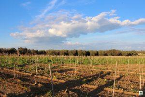 vino biologico del Salento