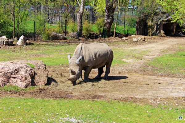 Parco Natura Viva e Zoo Safari a Bussolengo