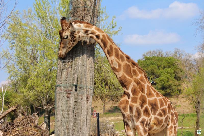 Zoo Safari prezzi e informazioni