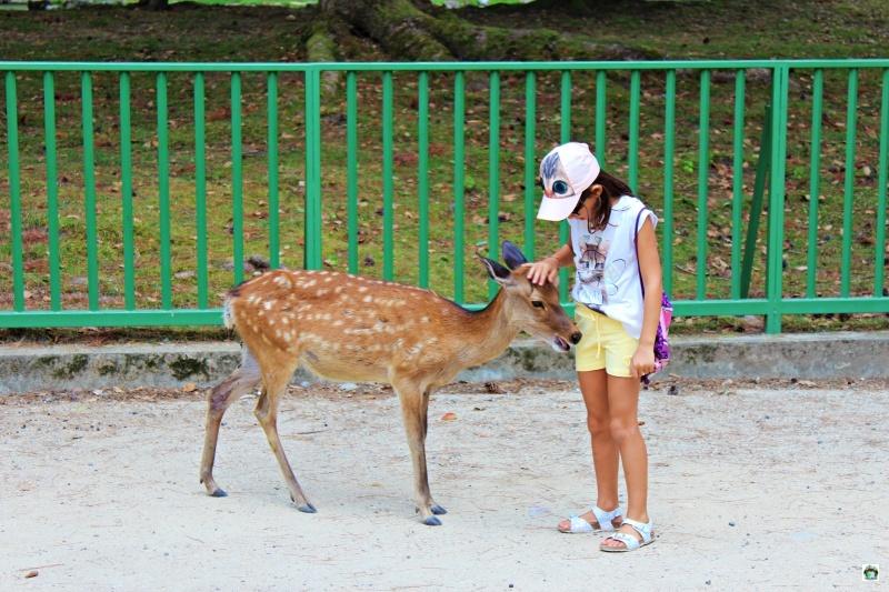 parco dei cervi di Nara in Giappone con i bambini