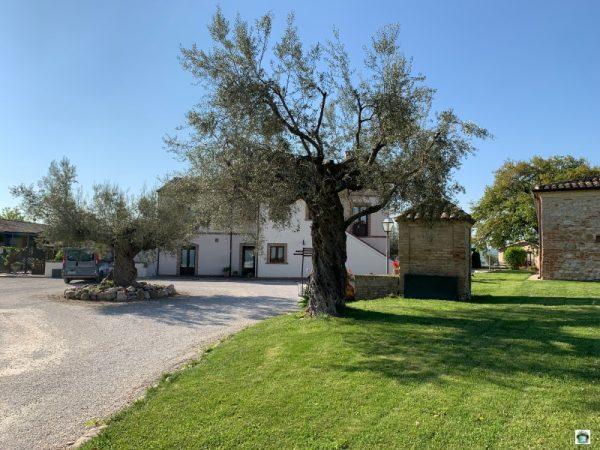 ulivi borgo spoltino country house in Abruzzo