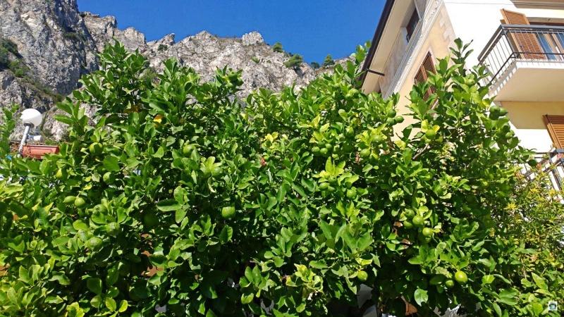 i limoni del lago di Garda