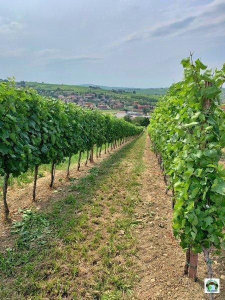 Oltrepò Pavese viticoltura