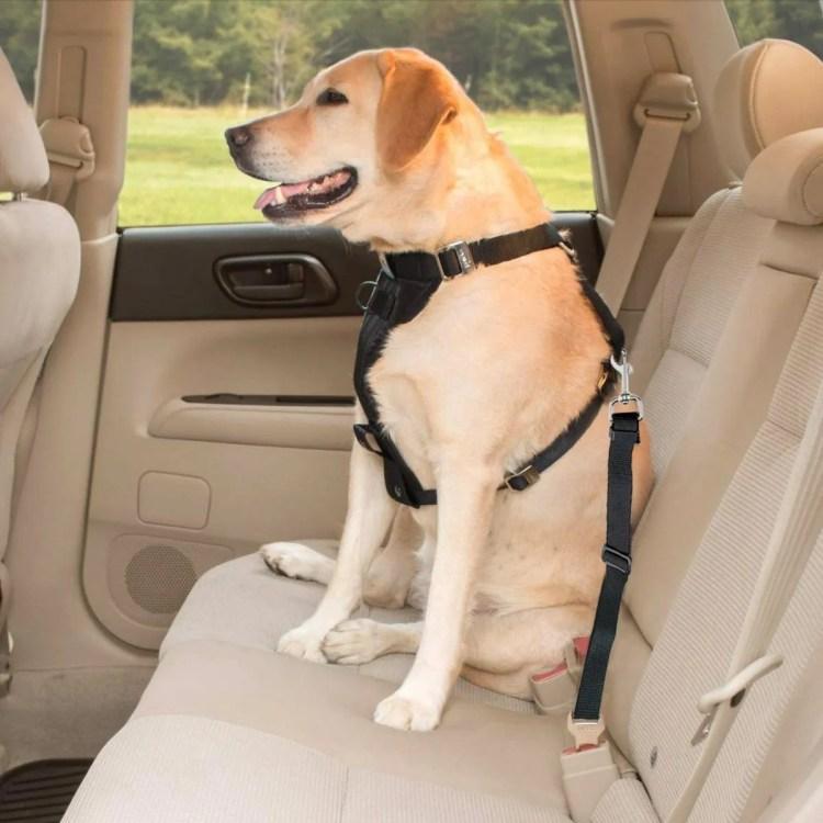 cinturon de seguridad para viajar con mascotas