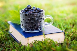 Black currant berries on a book in the garden on the grass in sunny weather
