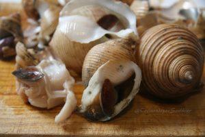 cocer caracolas de mar
