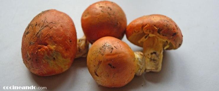 Boletus edulis: características y usos culinarios