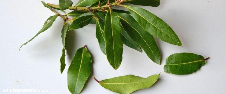 Usos culinarios y propiedades del laurel y otras hierbas aromáticas