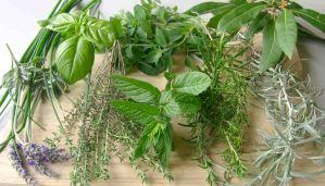 Propiedades y usos culinarios de hierbas aromáticas