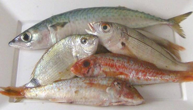 Los pescados más usados en cocina - ingredientes