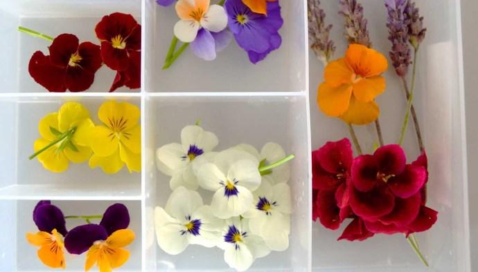 Diez flores para cocinar: usos y sabores